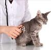 Ветеринарные клиники в Баксане